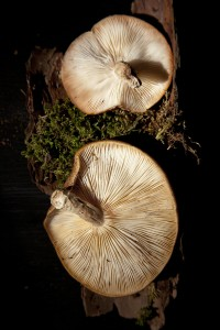 two_mushrooms