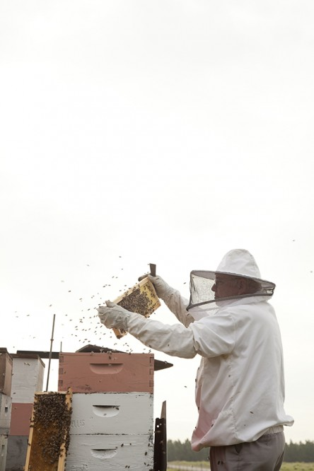 20120309_bees_16