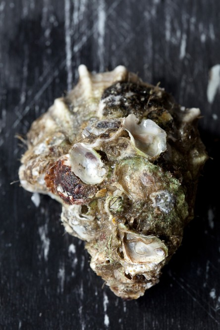 oysters_01